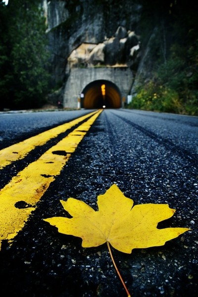 Autumn Leaf on Yosemite Road