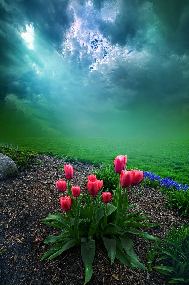 A Dream For You by phil1 - Beautiful Flowers Photo Contest
