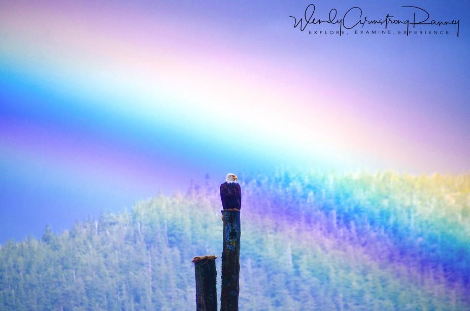 Eagle rainbow 4