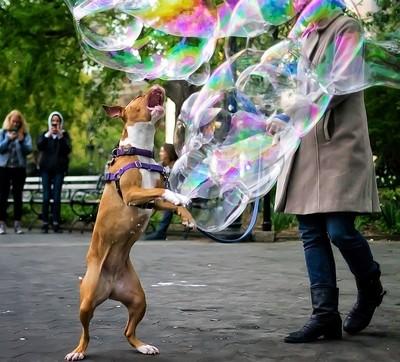 Throw me a bubble