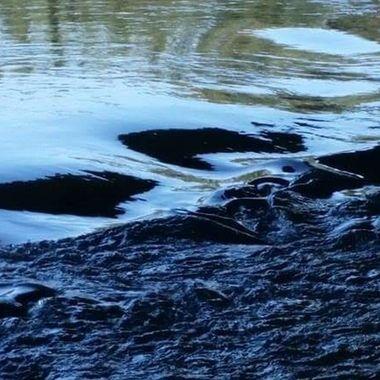 Sacramento river cools the 116 degree day!
