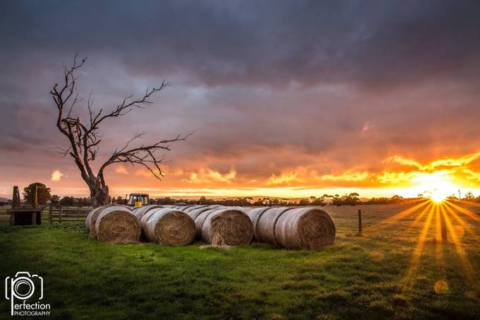 Sunrise at the cattle station Pakenham Victoria by stephenpretty - A Lonely Tree Photo Contest