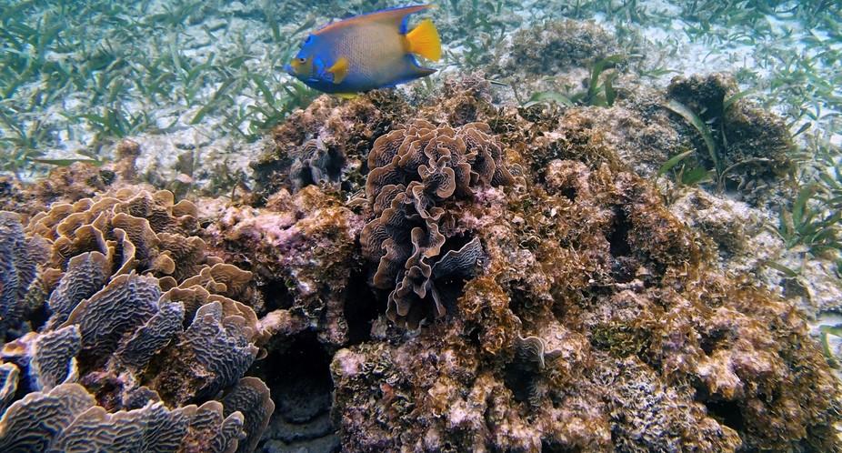 beautiful fish on reef