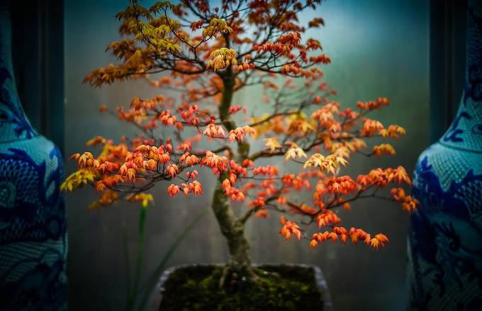 TINY TREES by carl_doghouse - Colorful And Bright Photo Contest