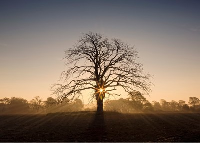 Oak Sunrise