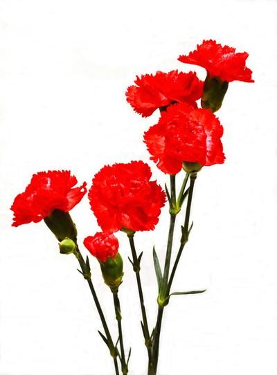 DSC_2376 -5 red carnations.