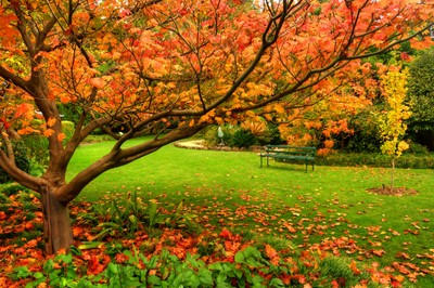 Autumn in Geelong