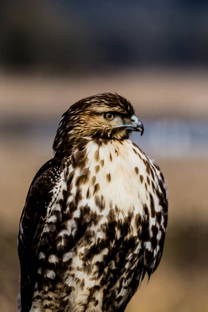 This guy seemed to be posing for me while I got several shots. Taken at Ridgefield, Wa. wildlife refuge.