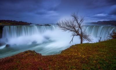 The Lone Tree of Niagara Falls