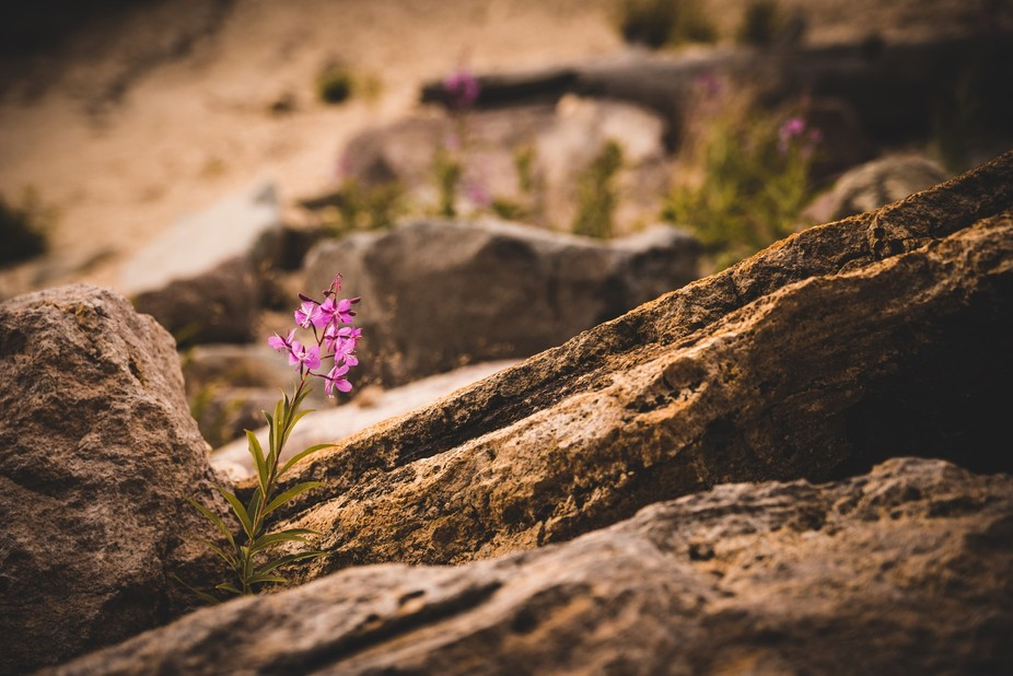 A solitary flower growing out of a natural rock wall