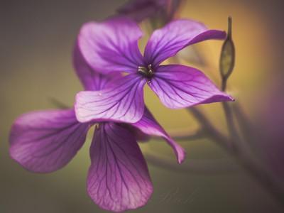 ** Flower Dance **