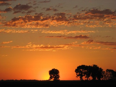 Mid-summer Cottonwood silhouettes