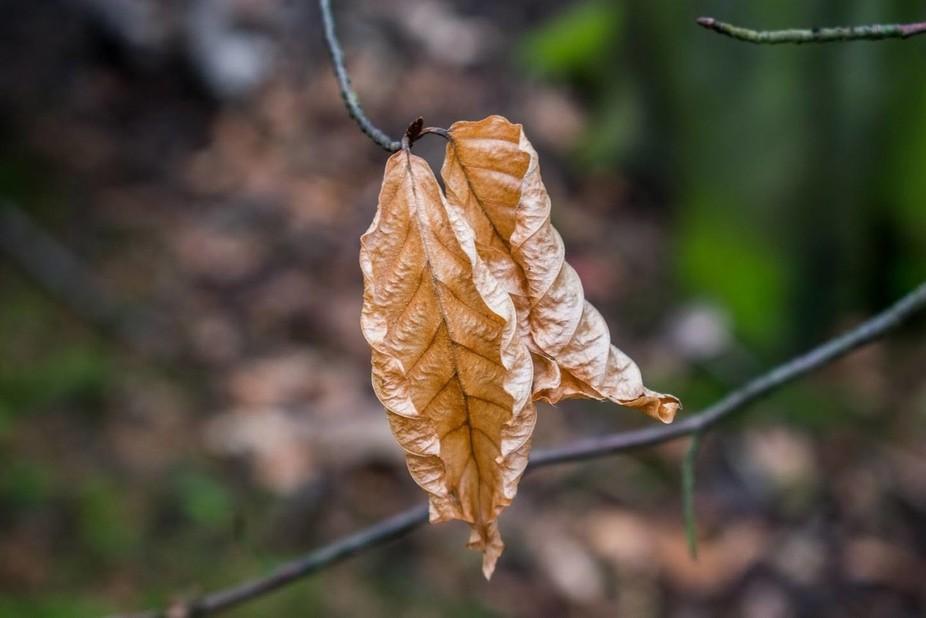 Leaf Closeup