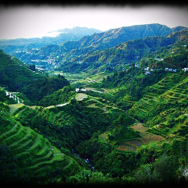 Rice Terraces in the Philippines