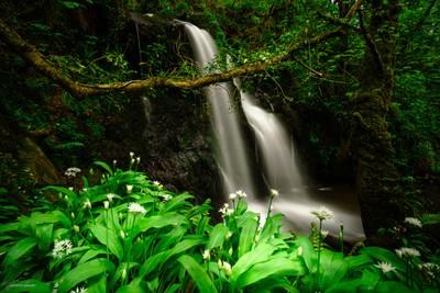 Aberfforest Waterfall, Wales