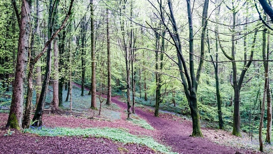 Castle Coch to Caerphilly Mountain through the Forest Fawr  Leafy paths wait to be trampled by su...