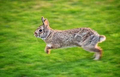 Run Rabbit, Run