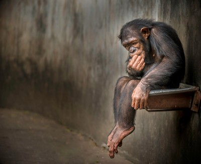 The Great Thinker