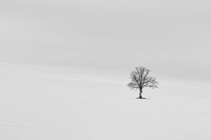 Alone by Ivan_Bertusi - Winter In Black And White Photo Contest