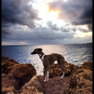 #sunset #hopetounwa #hopey #westernaustralia #southwestern #fitzgeraldriver #whippet #australia #westernaustralia #thisiswa #whippetsofinstagram #whippetlove #whippets #whippetgram #dogsofinsta #dogsofinstagram #barkhappy #unleashedexplorer #whippetfeature