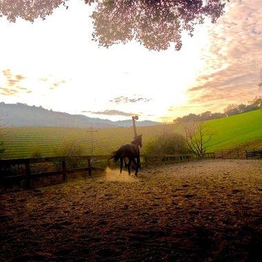 Horses in Landscapes