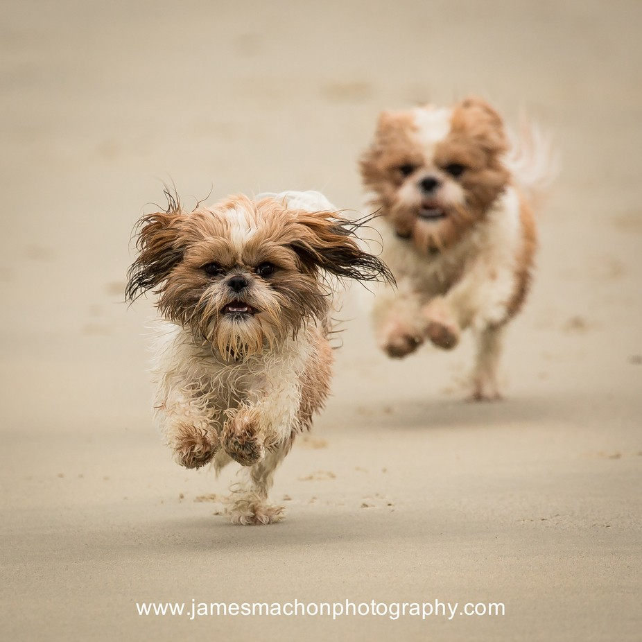 The Chase by James1970 - Running Photo Contest