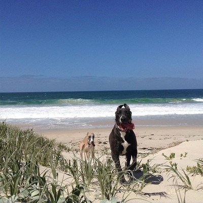 Another glorious day in Hopetoun. WA. The troublemakers enjoying the freedom of being off the leash and having the whole beach to themselves. No filters needed when the colours are so gorgeous. #westernaustralianphotographer #westernaustralianphotography