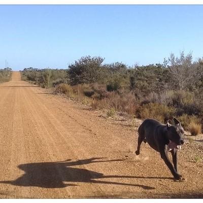 Go Maggy Go, Maggy enjoying the sunshine. #outback was #australiagram #australiasgoldenoutback #dogs #unleasedexplorers #unleashedexplorer #dogsunleashed #dogsofinstaworld #dogsofinstgram #dogsofinsta #dogsofinstagram #dogsoftheday #dogsoftheday #dogselfie