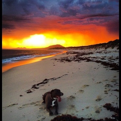 Tongue out Tuesday  #barkhappy #hikingdogs #hikingdogsofinstagram #hikingadventures #hikingdog #hiking #dogsofinstaworld #dogsofinsta #dogsofinstagram #dogsunleashed #southernocean  #barkhappy #furchild #unleashedexplorer #unleashedexplorers #toungeouttue