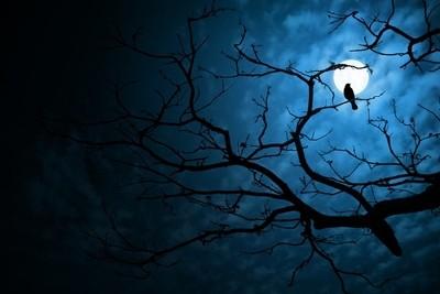 silent night..
