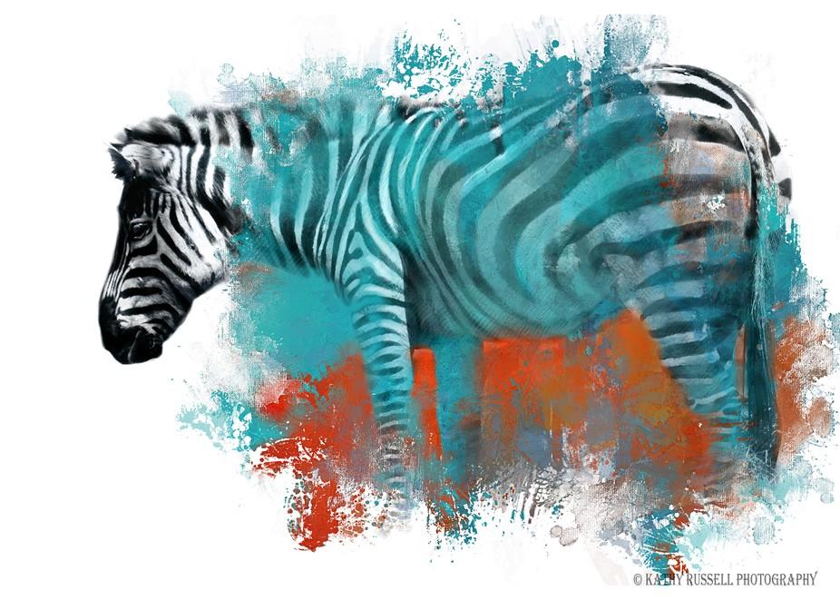 Zebra in Color