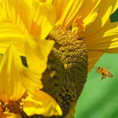 flower and bee mcu 2.0