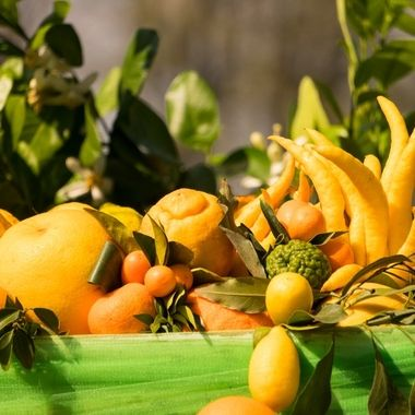 Assorted lemmons which are grown in Tuscany, Italy.