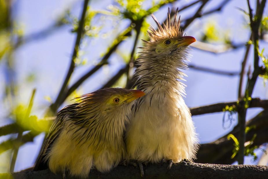 A couple of Birds.