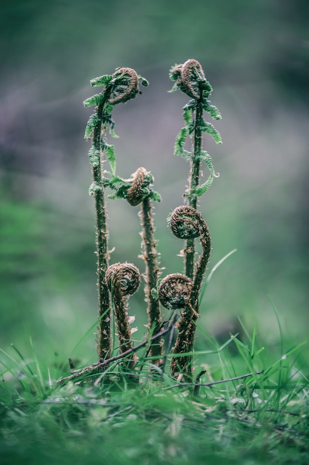 new green by LAcreativephotography - Image Of The Month Photo Contest Vol 22
