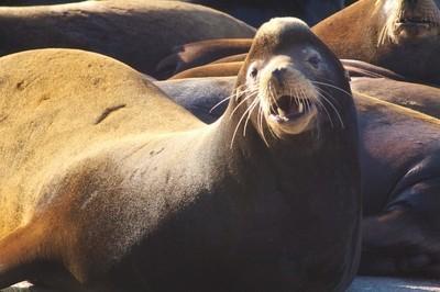 sea lion at westport