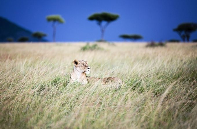 Grassland Watch by JenniferMacleod - Image Of The Month Photo Contest Vol 22