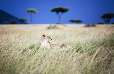 Grassland Watch