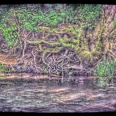 roots on river bank in hd in Centralia, WA