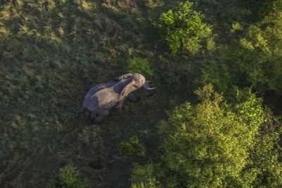 Elephant from above