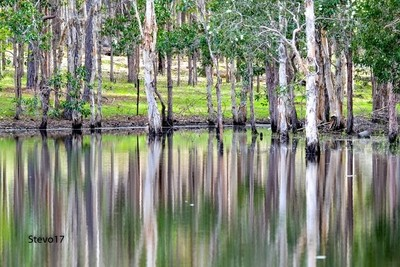Home Dam Reflections