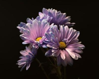 Purple Clutch 0508