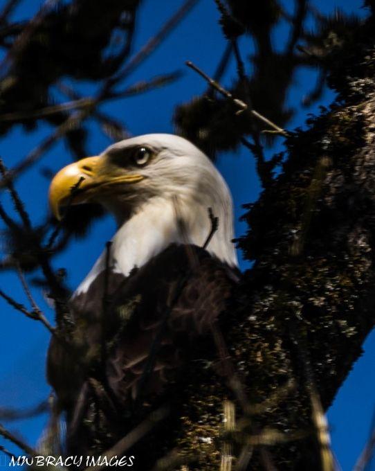This bird was one of 2 surveying marshland
