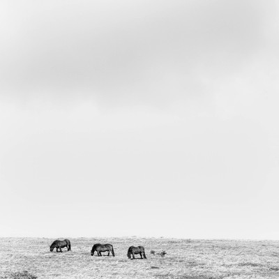 Horse Hill