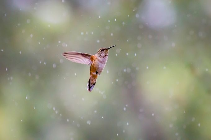 Rain or Shine by SaltyGirl - Just Hummingbirds Photo Contest