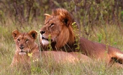 4. Nakuru Lions 555a