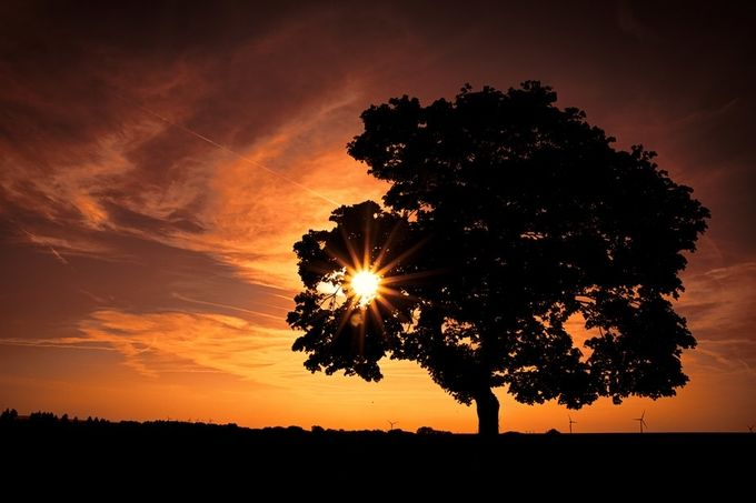 Magic Of The End by Olav - Tree Silhouettes Photo Contest