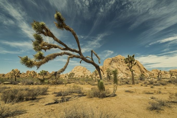 Desert Days by chrisantoniniphotography - The Nature Lover Photo Contest