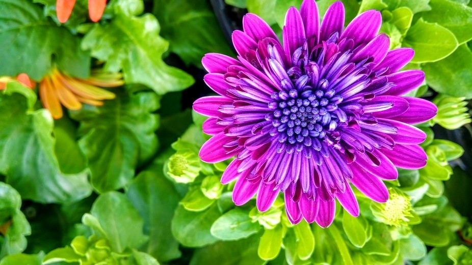 Love the contrasting colors. The purple pops against the green