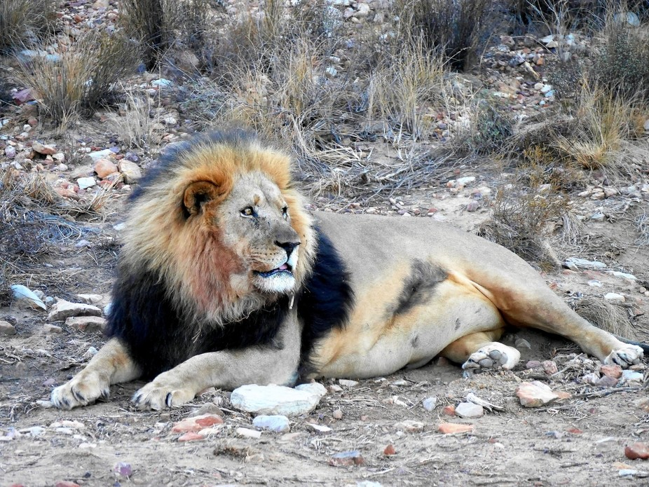 Taken in South Africa at Aquila Private Game Park